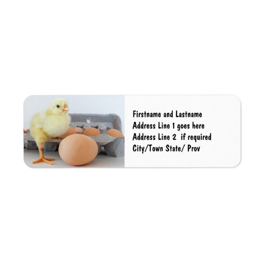 Chick and Egg Carton with Brown Egg