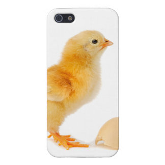 Chick Cover For iPhone 5/5S
