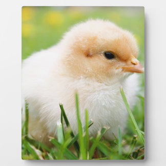 Chick Photo Plaques