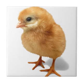 Chick Small Square Tile