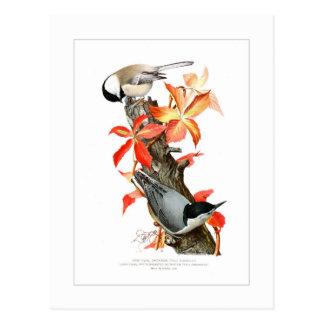 Chickadee and Nuthatch Postcard