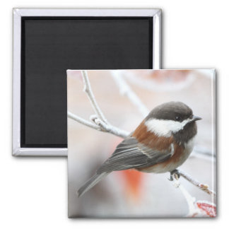 Chickadee in Winter Magnet