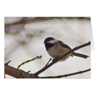 Chickadee on a Twig Greeting Card