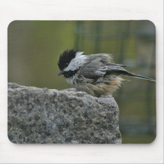 Chickdee taking bath mouse pad
