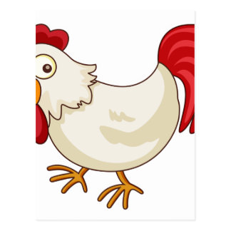 Chicken cartoon postcard