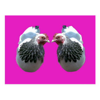 CHICKEN DUO ON MAGENTA POSTCARD