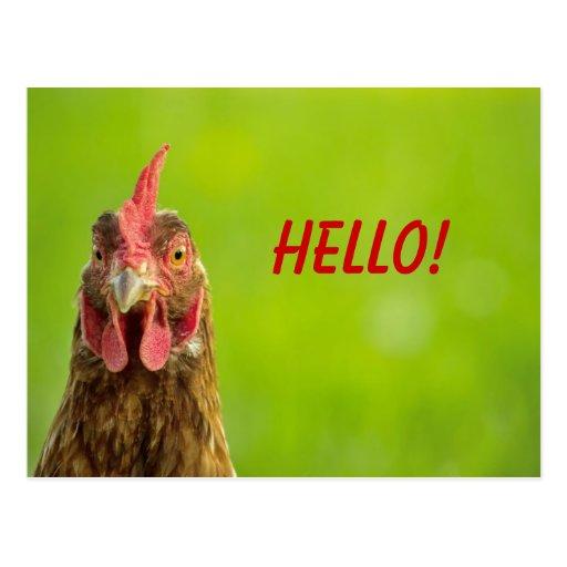 Chicken - Hello Postcard