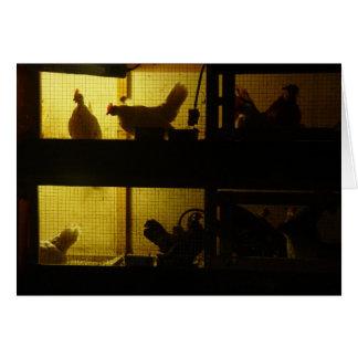 Chicken House Card