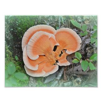 Chicken Of The Woods Mushroom Photo Print