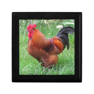 Chicken Small Square Gift Box