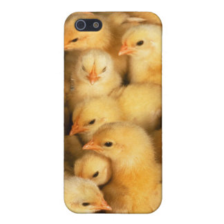 Chicks baby chickens cover for iPhone 5/5S
