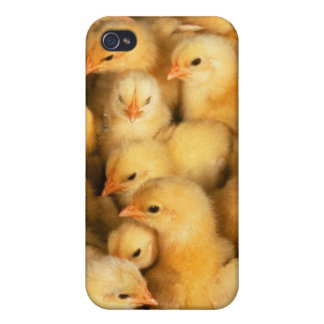 Chicks baby chickens iPhone 4 cases