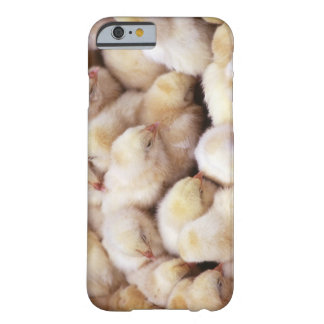chicks, brood of chickens barely there iPhone 6 case