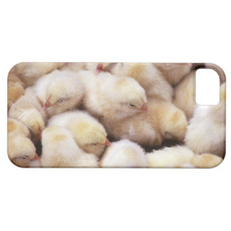 chicks, brood of chickens iPhone 5 cases