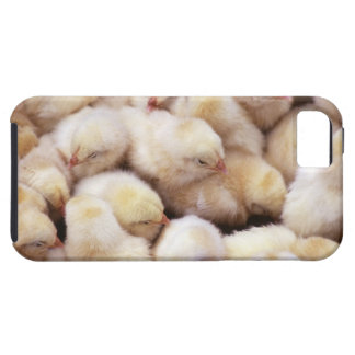 chicks, brood of chickens iPhone 5 cover