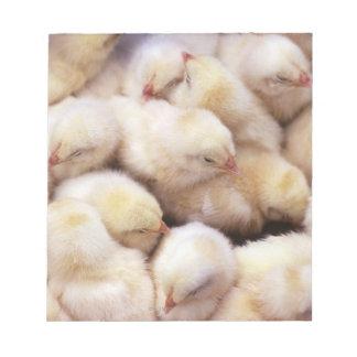 chicks, brood of chickens notepad