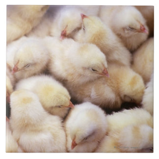 chicks, brood of chickens tile