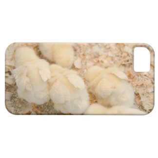 chicks iPhone 5 covers