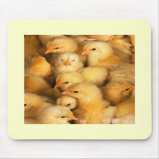 Chicks Mousemat