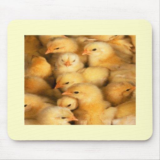 Chicks Mousemat