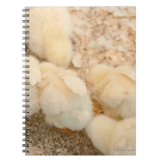 chicks notebook