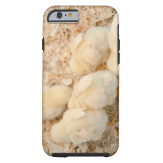 chicks tough iPhone 6 case
