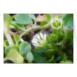 Chickweed (Stellaria media) Flowers Greeting Card