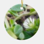 Chickweed (Stellaria media) Flowers Ornament