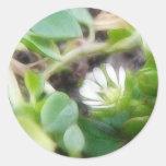 Chickweed (Stellaria media) Flowers Classic Round Sticker