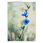 Chicory Cards
