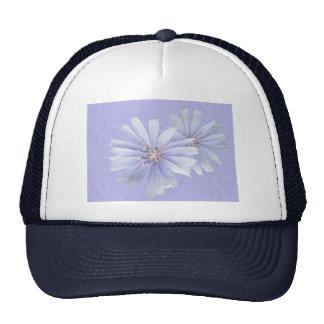 Chicory Wildflower Cap