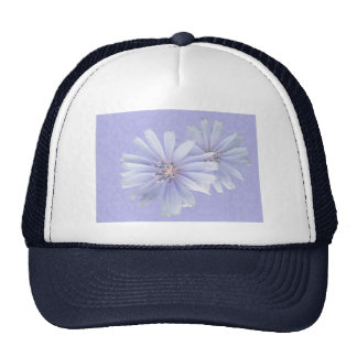 Chicory Wildflower Mesh Hats
