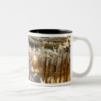chicos drying mug
