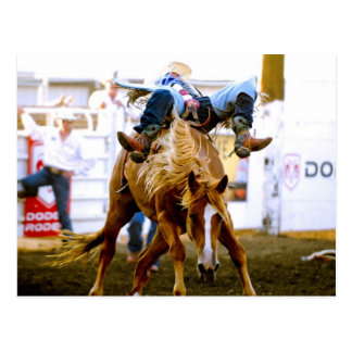 Chief Joseph Days Rodeo, Joseph, Oregon, USA 2 Postcard