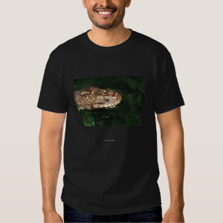 Chief Standing Bear Shirts