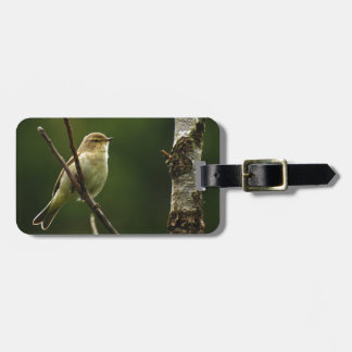 Chiffchaff bird perched on branch luggage tag
