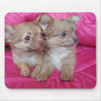 chihauhua puppies mouse pad