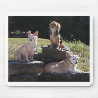 Chihuaha Rock Climbers! Mouse Pad