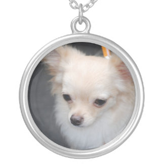 chihuahua-29.jpg round pendant necklace