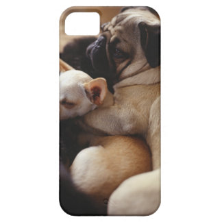 Chihuahua and Pug sleeping, close-up Barely There iPhone 5 Case