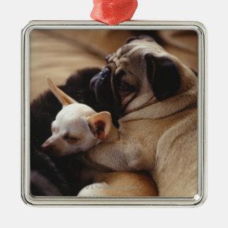 Chihuahua and Pug sleeping, close-up Christmas Ornament
