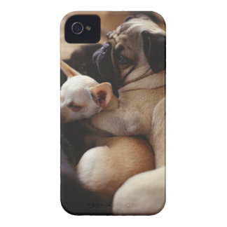 Chihuahua and Pug sleeping, close-up iPhone 4 Covers