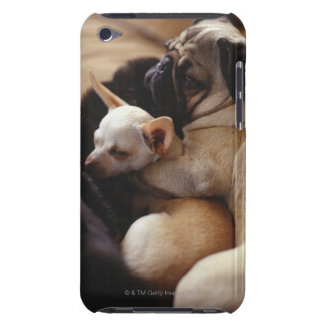 Chihuahua and Pug sleeping, close-up iPod Touch Case