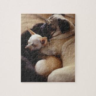 Chihuahua and Pug sleeping, close-up Puzzle