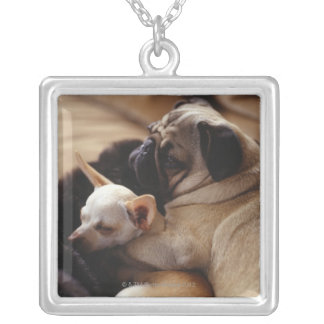 Chihuahua and Pug sleeping, close-up Silver Plated Necklace