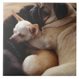 Chihuahua and Pug sleeping, close-up Tile
