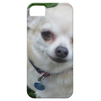 Chihuahua iPhone 5/5S Covers