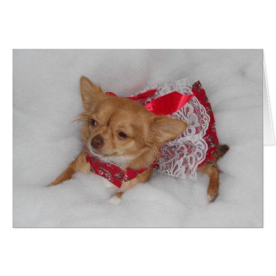 chihuahua Christmas dream card