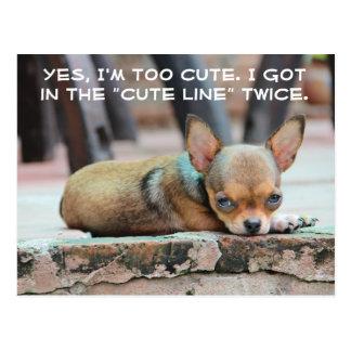 "Chihuahua ""Cute Line"" Dog Postcard"