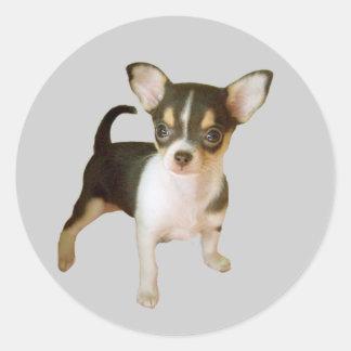Chihuahua Cutie Sticker